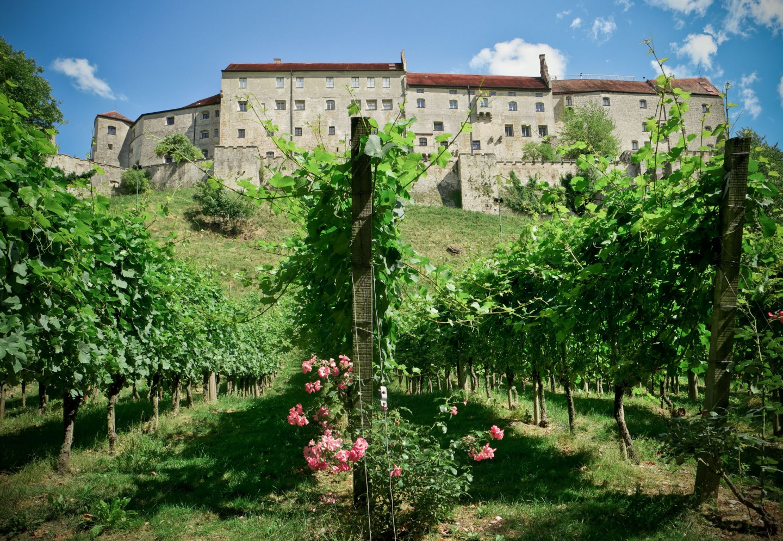 Rebhang unterhalb der Burg in Burghausen