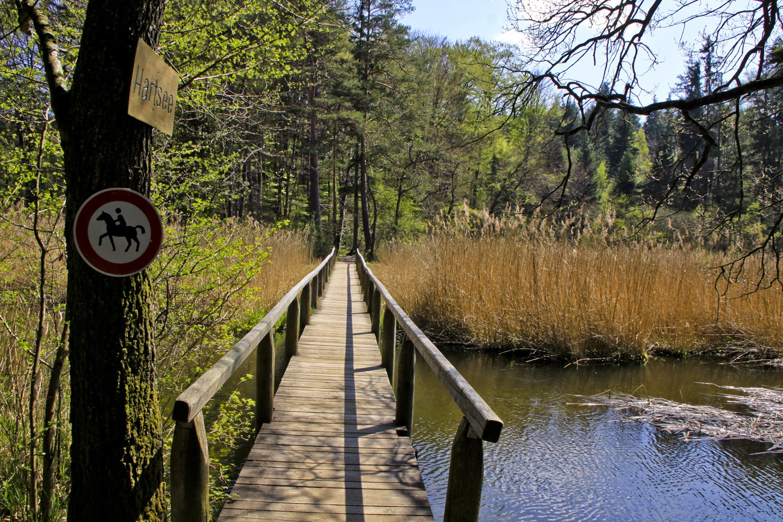 Am langen Holzsteg beim Hartsee